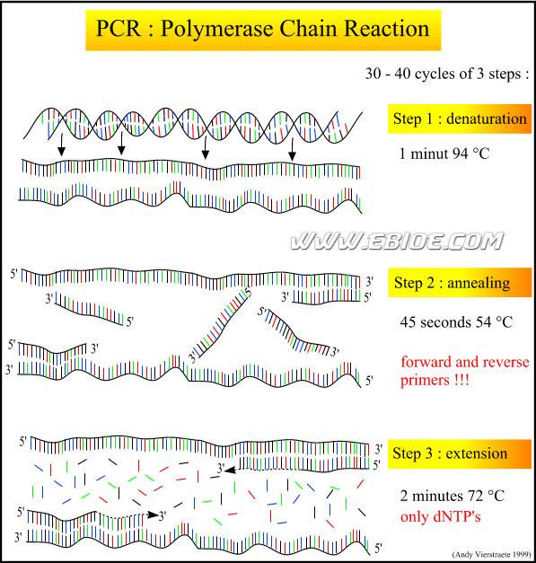 pcr操作过程